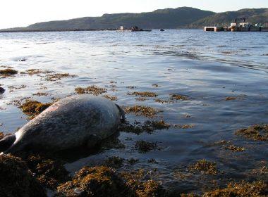 Mapped: every Scottish salmon farm that shot seals 6