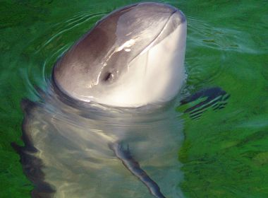 Scottish Government protecting wind farms not porpoises, say advisors 12