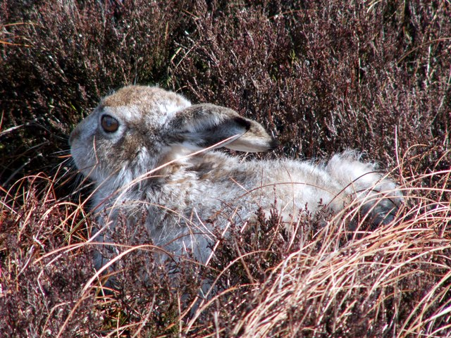 Outrage over mass killing of mountain hares 8