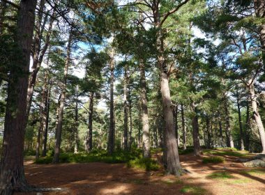 Revealed: £1m tax sweetener for Cairngorms land deal 7