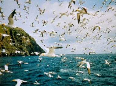 Seabird populations crashing because of climate pollution 6