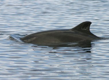 Energy firms prevented porpoise protection 10