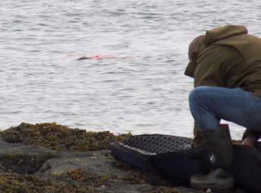 Exposed: the inhumane shooting of hundreds of seals 9
