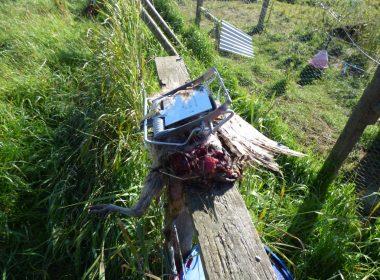 Pole trap