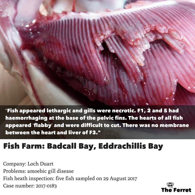 Horror photos of farmed salmon spark legal threat 23
