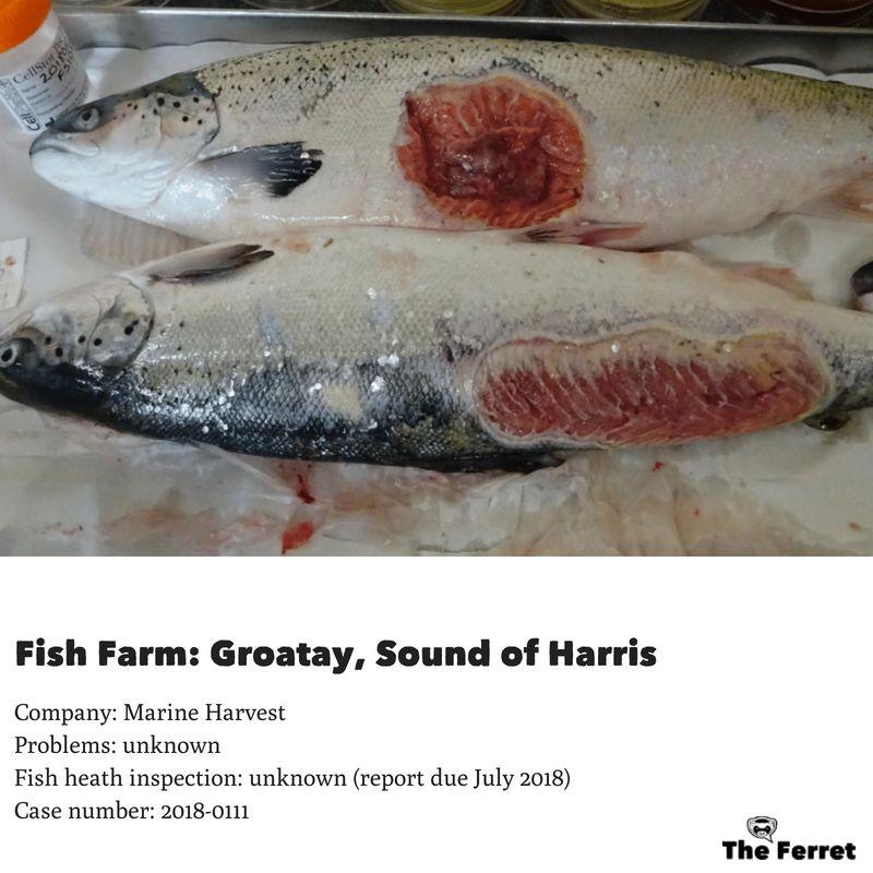 Horror photos of farmed salmon spark legal threat 20