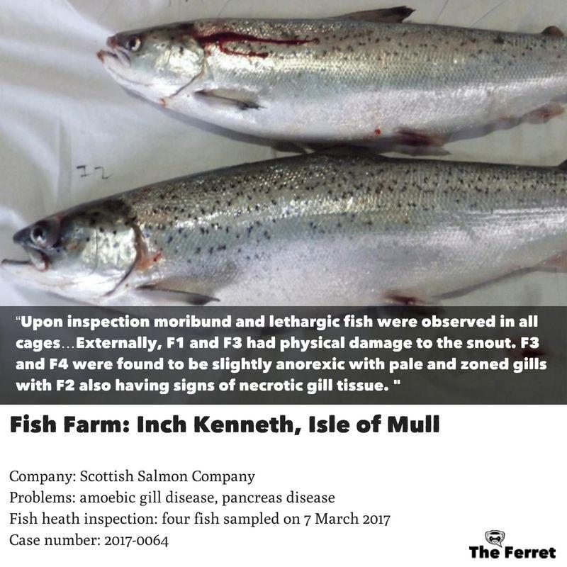 Horror photos of farmed salmon spark legal threat 19