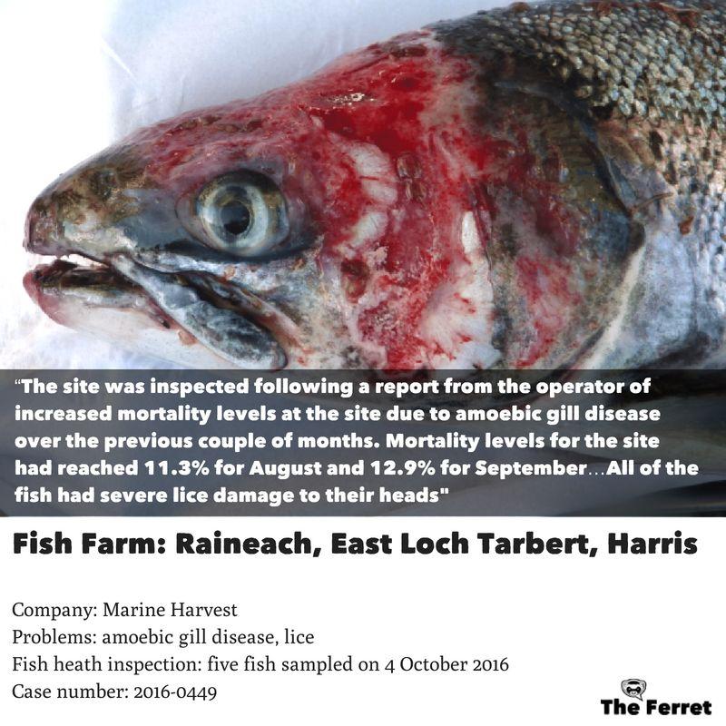 Horror photos of farmed salmon spark legal threat 17