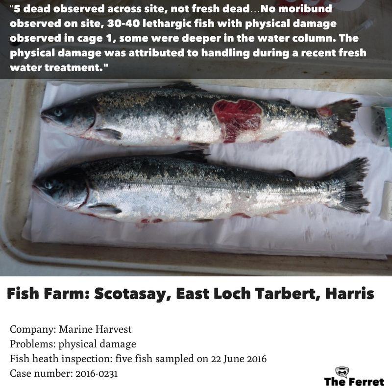Horror photos of farmed salmon spark legal threat 18