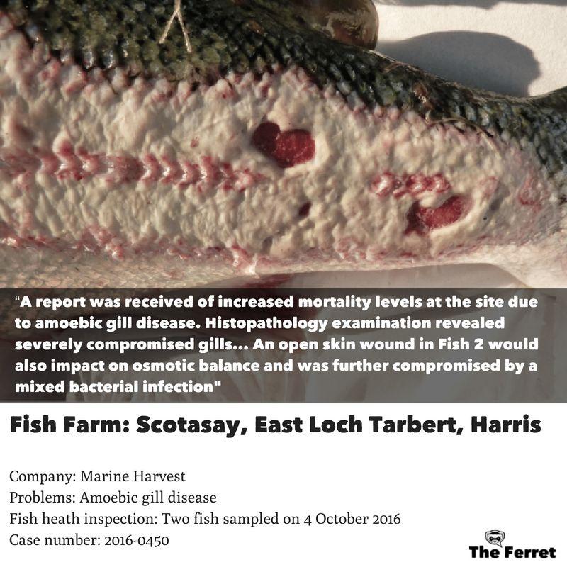 Horror photos of farmed salmon spark legal threat 9