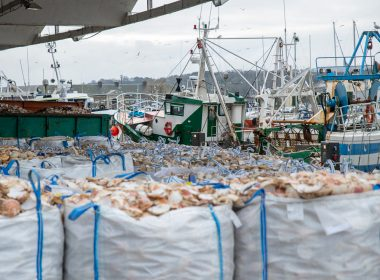Fines to rogue fishermen fall and illegal fishing escapes prosecution 12
