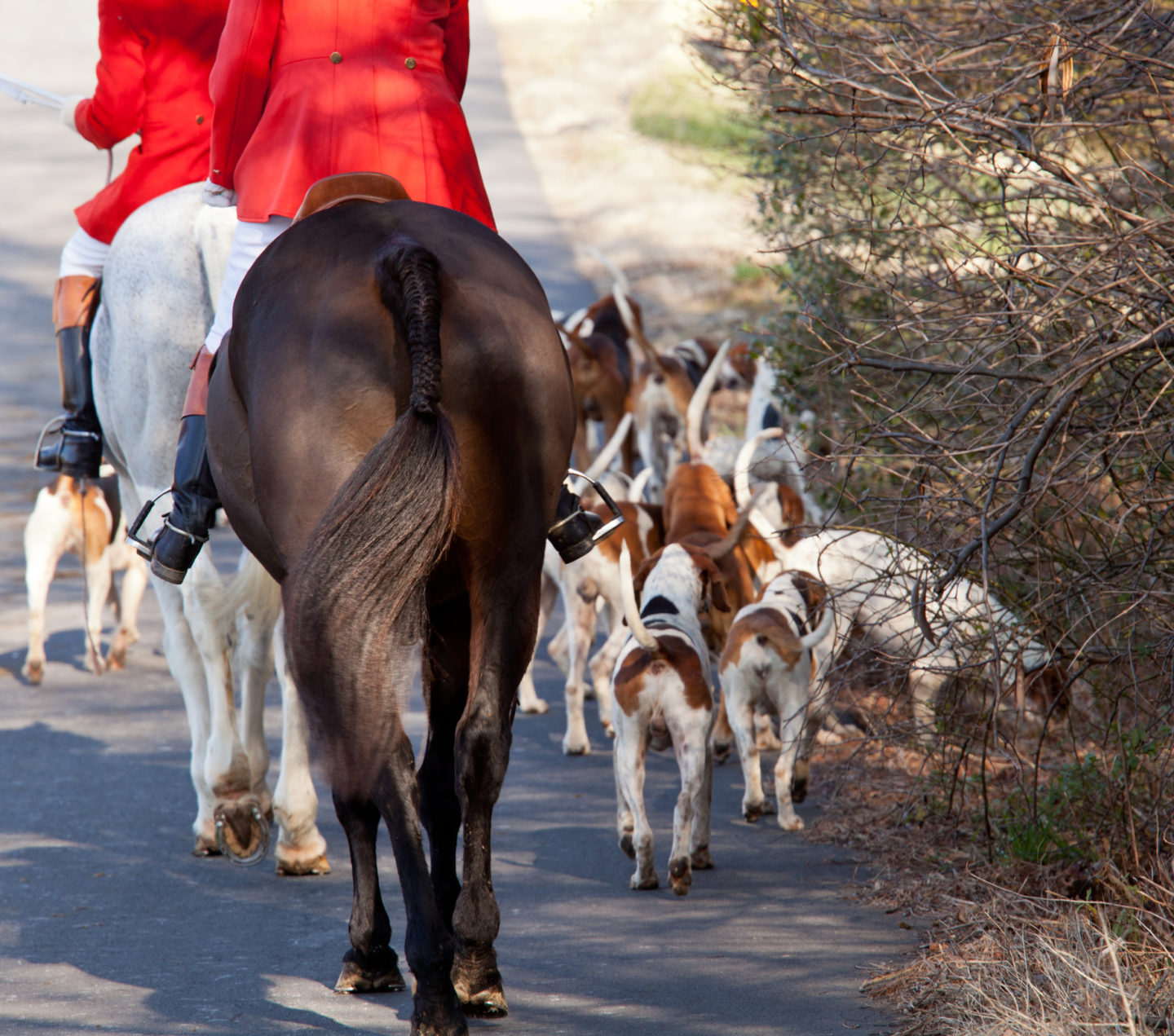 Footage of fox hunt released amid calls for legislation to be strengthened 8