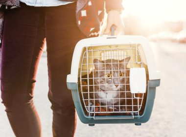 Animals could suffer as welfare charities impacted by Covid-19 6