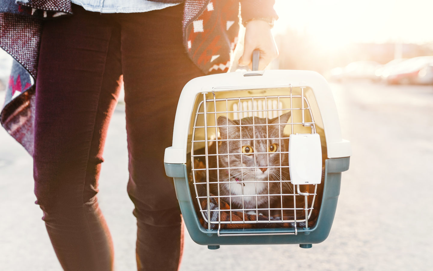 Animals could suffer as welfare charities impacted by Covid-19 9
