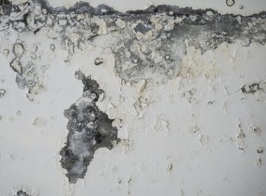 Tenants are complaining about mould