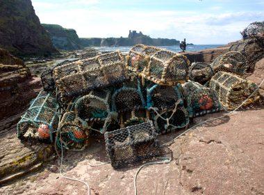 Marine Scotland critised
