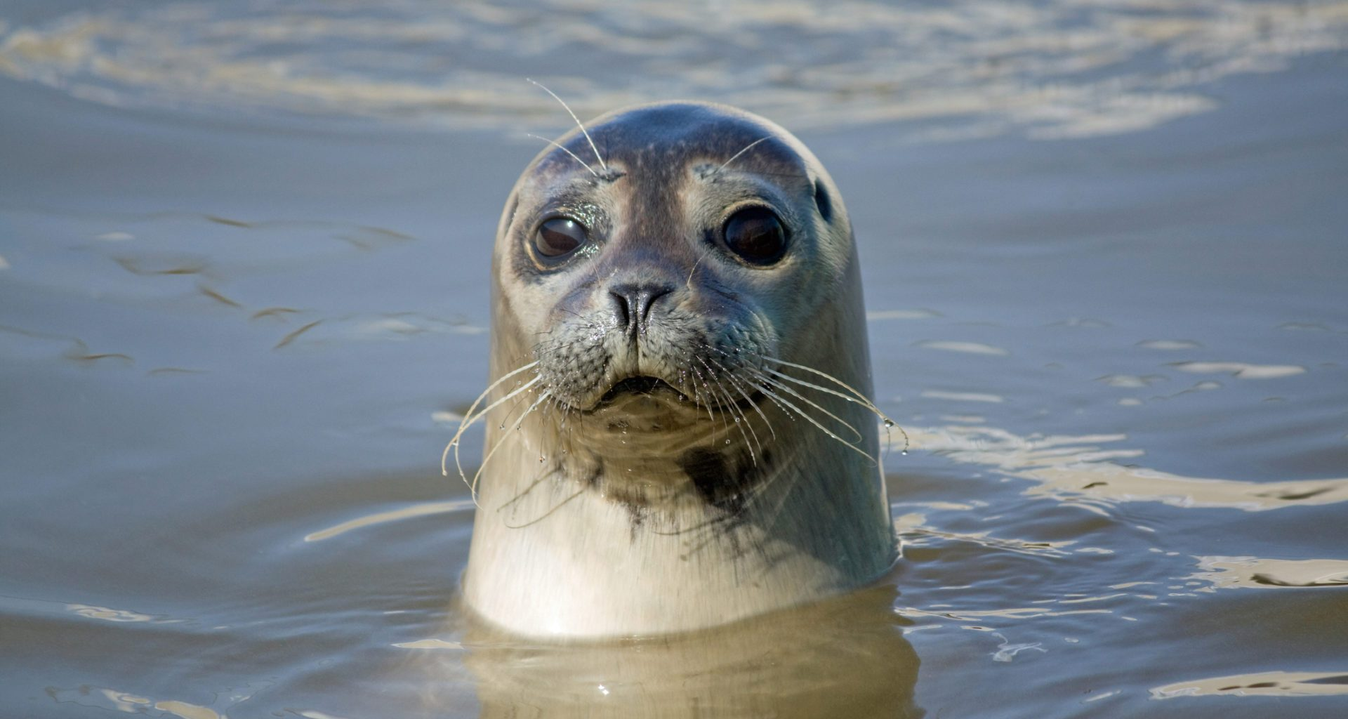 £5,000 reward offered for information on illegal shooting of seals 8