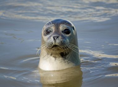 £5,000 reward offered for information on illegal shooting of seals 9