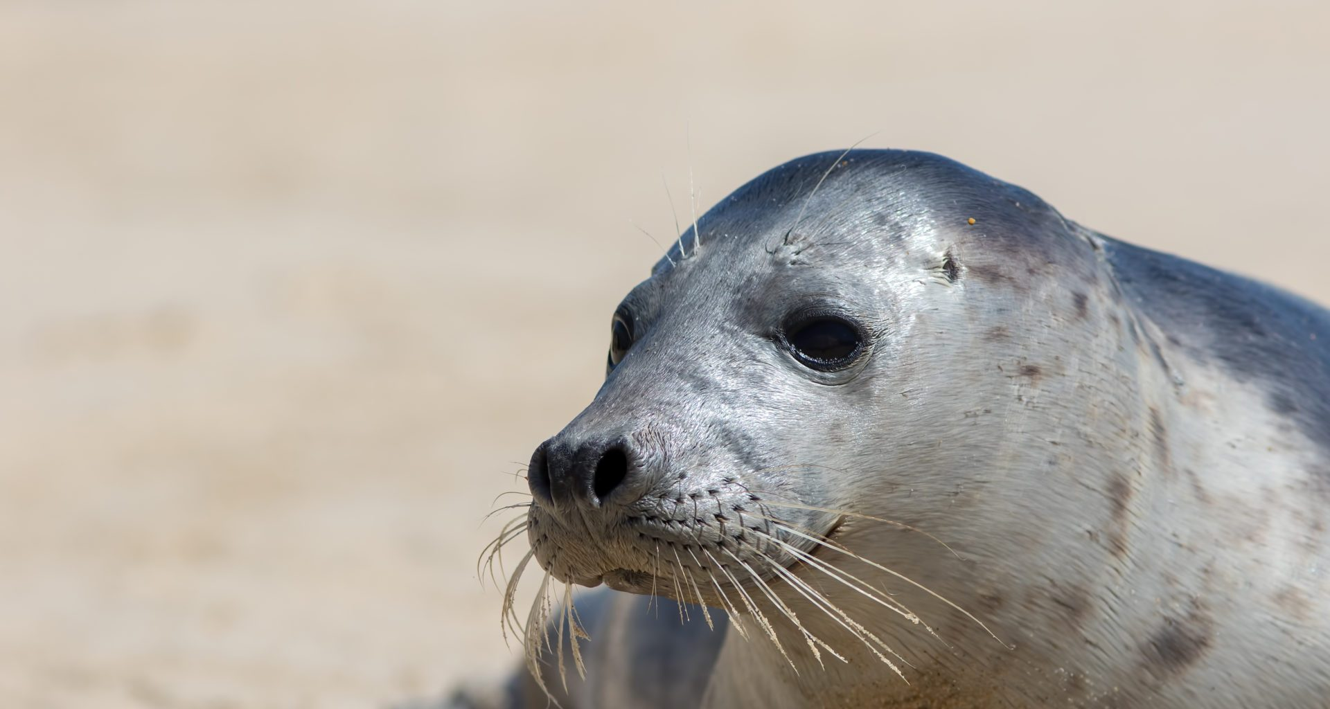 £10,000 reward for information on illegal seal killing after police asked to investigate deaths 8