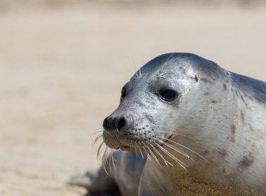 £10,000 reward for information on illegal seal killing after police asked to investigate deaths 9