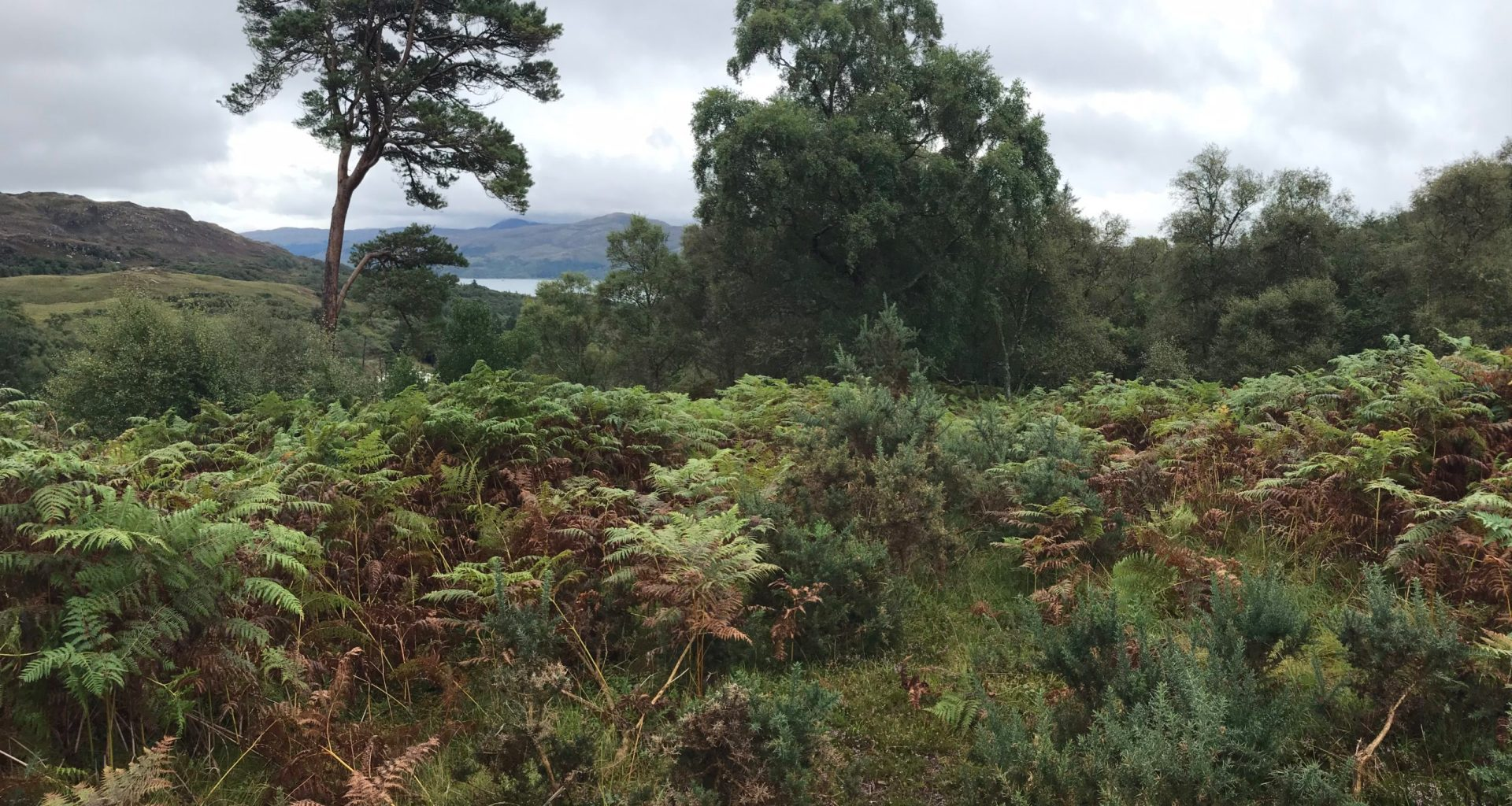 Highland estate owner breaching public access rights, say locals 8