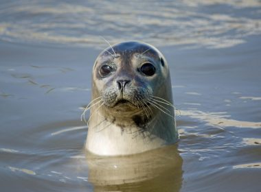 """Investigation launched over use of """"seal scarers"""" by fish farms 8"""