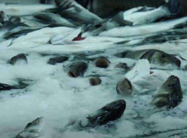 Ocean desolation: how fish farm pollution is killing marine life in Greece 8
