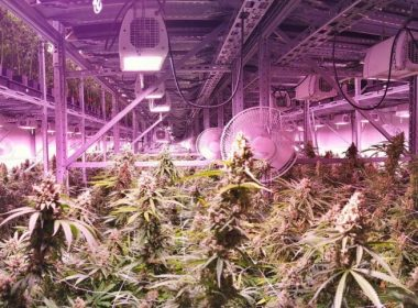 Trafficked: concerns over criminalisation of young Vietnamese found in cannabis factories 9