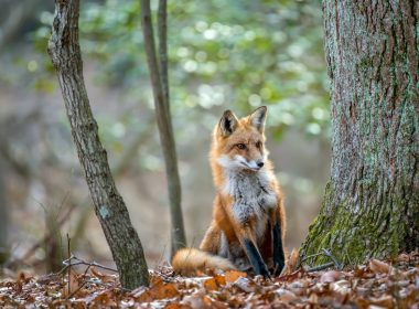 Animal charity urges ministers to enact plans for tighter fox hunting law after huntsman convicted 8